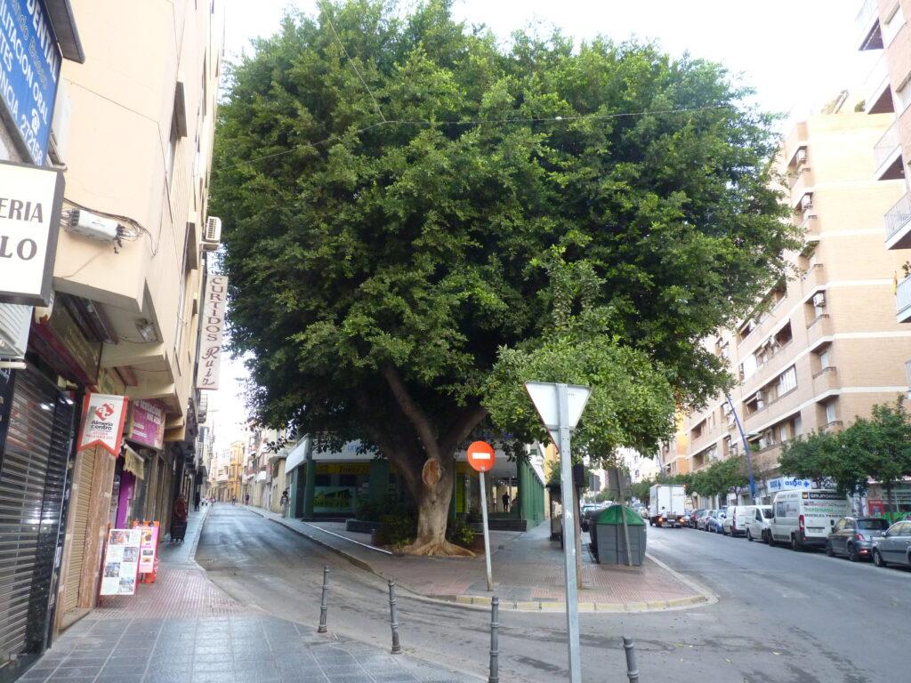 Calle Magistral Domínguez1
